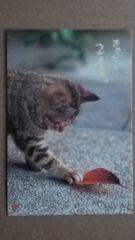 ★猫ねこ(=^ェ^=)ポストカード★