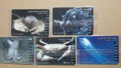 明治 深海生物カード5枚 リュウグウノツカイ他 生物図鑑グミ 深海生物編