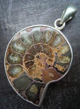 ☆即決☆アンモナイトシルバートップ 4.3センチ 化石