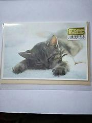 キャットフォト メッセージ カード 封筒 セット 猫 ねこ ネコ