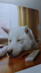 新品★非売品SoftBank「勉強中居眠りお父さん柄」クリアファイル
