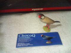 タカラ  チョコQ  アニマル3  ブンチョウ  文鳥  シナモン