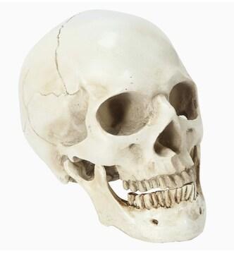 頭蓋骨 スカル インテリア 骨 ボーン 置物