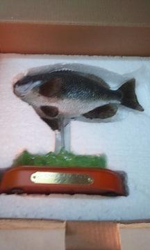 デプリカ・LargescIed bIackfish・クチブト 18×18送料込み