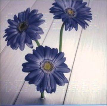 小室哲哉作品英語カバー集 CAN YOU CELEBRATE英語カバー収録